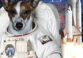 first dog on the moon