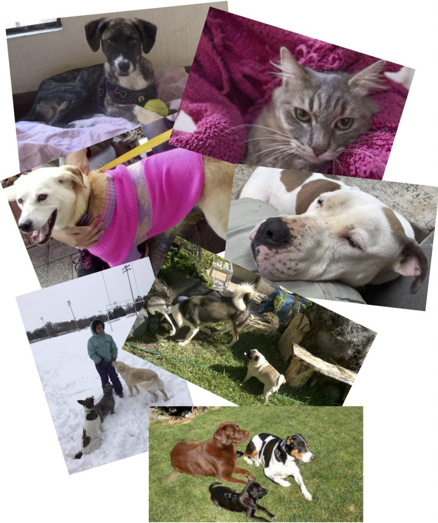 adoptees 2016